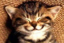HAPPINESS / by Karen Stephansky