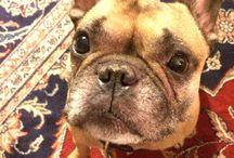 Other People's Pets dot Pinterest dot net / by John Paul Titlow