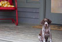 I WANT A DOG! / by Ginna Broce