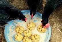 chickens / by Mary Poblocki-Allen