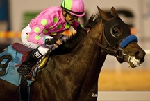 2012 Kentucky Derby horses / The post time for the 138th Kentucky Derby is 6:24 p.m. Saturday, May 5. / by Buffy Andrews