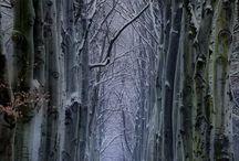 Jour de neige / by Yves Landry