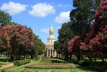 Baylor University / by Gary Owens