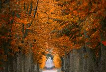 Autumn love / by Kerry Lynn Agnell Stacks