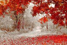 Winter Wonderland / by Julie Morton White