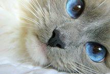Cats / by Carla Van Galen