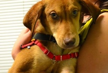 Adorable Adoptables / by Embrace Pet Insurance