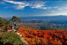 Arkansas & Razorbacks / by Joan Tallent