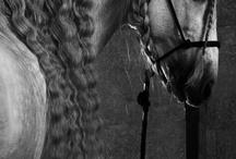 Horses(: / by Rebecca Neal