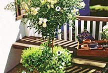 garden fun / by Lucy Tedesco