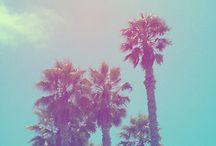 palm trees / by Linda Minor