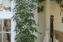 Ivy- ferns-flowers  / Ivy and ferns are beautiful plants my favorite!! And I love watching them grow! / by Sharron Ewing
