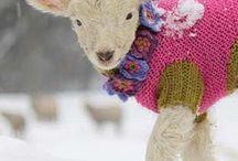 sheep and lambs / by Kristin Nicholas