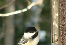 Bird Watching / by ThriftyFun