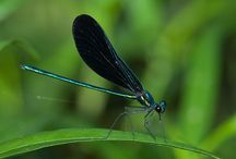 Insects / Beautiful and amazing insects! / by Katie Zientek