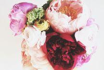 floral / by Heather DeStena
