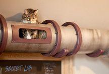 Cats:) / by Lisa Reinert