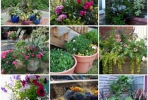 Gardens: Containers and Potting Tips / by Debra Burg