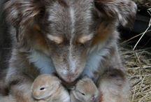 animals / by Lynette Locke