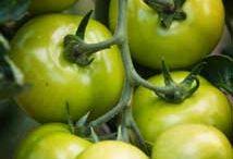 Gardening Fruit & Veg / by Jo Hewitt Brett