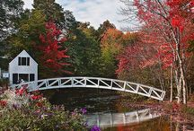My Bridges / by Colleen Hill-Rakunas