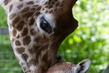 Animals! / by Camden Gustason