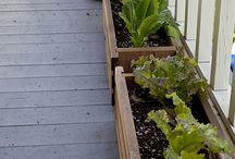 Garden ideas / by Jennifer Ewart