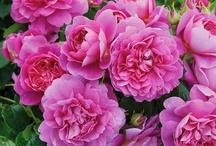 I love Pink!~ / by Elizabeth Rayburn