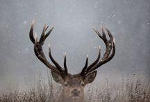 Deer heart / by Jan Mardis