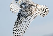 Snowy Owl / by Stealth Angel
