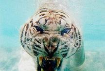 Animals / by Brian Molidor