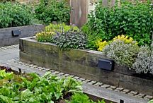 Garden Design / by StyleCarrot • Marni Katz