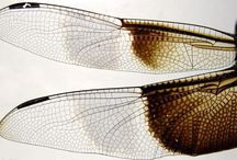 Dragonflys / by Rebekkah Smith Aldrich