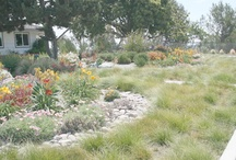 no grass landscape / landscaping front yards with no grass / by corey osteen