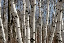 trees / by Cheryl Rightmyer