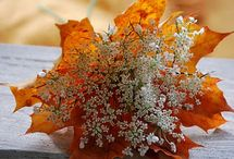 Fall / by Judy Anderson