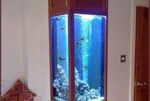 Fish Tanks / by Brandi Montgomery