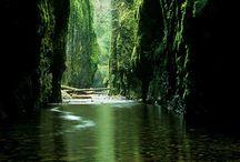 Oregon / by Jenny White Schnitzer
