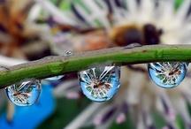 water drops / by Skye Vollick
