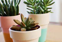 Plants / by Jovi Batarce