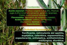 Plantas medicinales / by Ana Cecilia Rey Torres