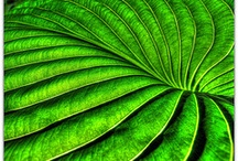 Greens / by Janis Lynn