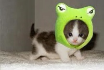 Too cute... / by Jamie Vota