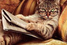 Cats / by Kalli Holub