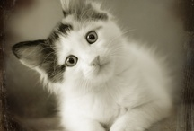 Cute Fuzzy Things / by Angela Rairden