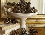 Pinecone Crafts & Decor / by Surviving a Teacher's Salary