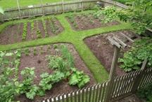 Garden Ideas / Ideas for future garden plans. / by Tanya Hayes