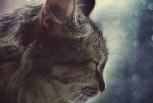 I love cats / by Allison Metz