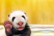 Cutie pie pets / by Lynn Holthaus