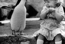 The one!! The only!!! PENGUINS!!!!! / by Caroline Ledet